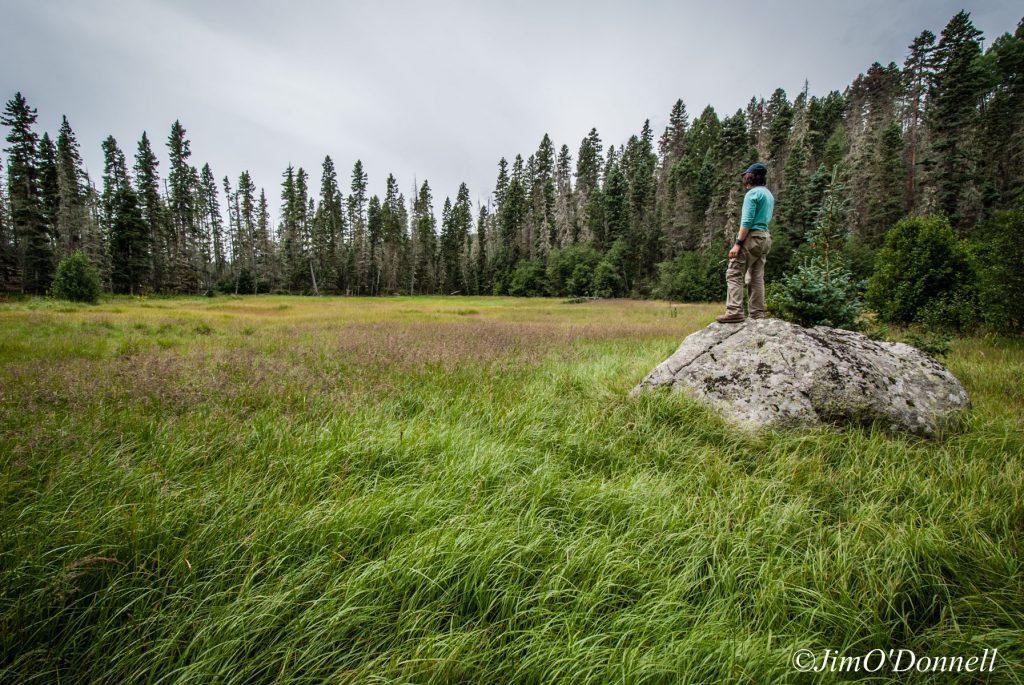 Upper Pecos Watershed Association - Pecos Wilderness Katherine Wetland
