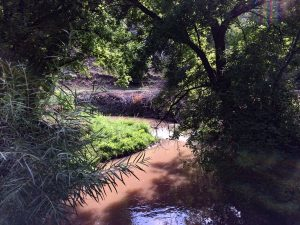Lower Cow Creek Bio and Cultural Reports